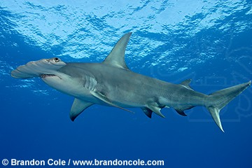 Montauk Shark Cage Diving Expeditions  EcoPhoto Explorers