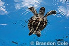 MISCELLANEOUS- Sea Turtles, Tortoises, Sea Snakes, Kelp, Algaes, Environmental images, Oil Rigs, Shipwrecks